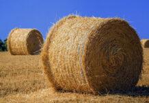 Jak pozyskać odpowiednie preparaty rolnicze