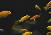 Jak wybrać odpowiednie akwarium dla rybek